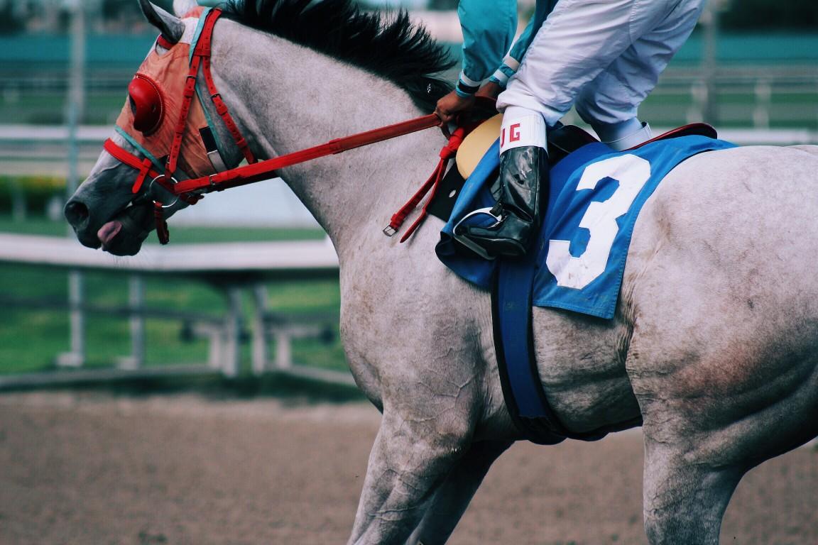 tour équitation